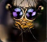 macro-bugs-1-600x528