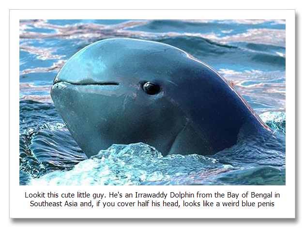 Irrawaddy-Dolphin.png | 630 x 471 png 539kB